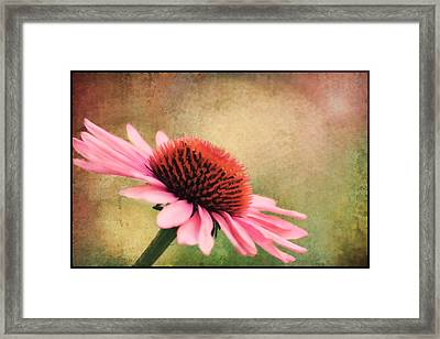 Pink Beauty Framed Print by Darren Fisher