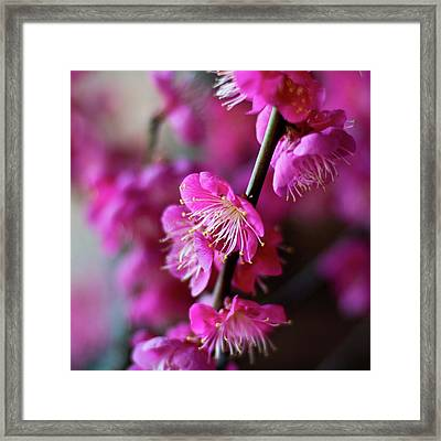 Pink Beauty Framed Print by I love Photo and Apple.