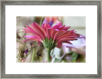 Framed Print featuring the photograph Pink Beauty by Joan Bertucci