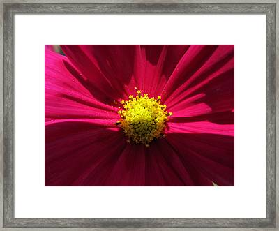 Framed Print featuring the photograph Pink Beauty by Tina M Wenger