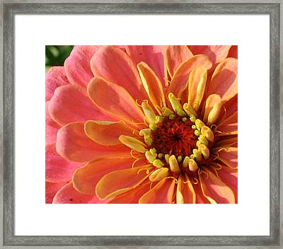 Pink Bliss Framed Print by Bruce Bley