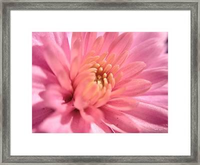 Pink Bloom Framed Print