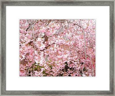 Pink Blossoms Framed Print by Carol Groenen