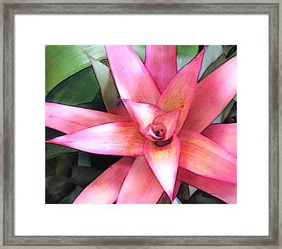 Pink Bromeliad Framed Print