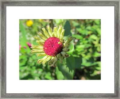 Pink Bud Framed Print by Tina M Wenger