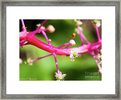 Framed Print featuring the photograph Pink Buds by John Burns