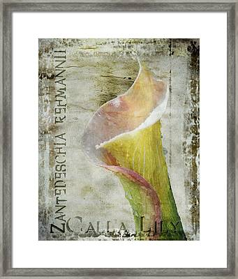 Pink Calla Lily Framed Print