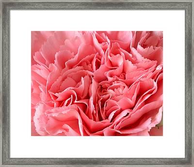 Pink Carnation Framed Print