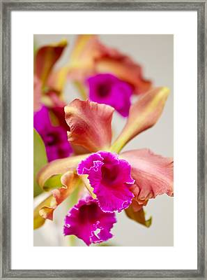 Pink Cattalaya Orchid Framed Print by Ron Dahlquist