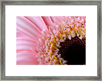 Pink Celebration Framed Print