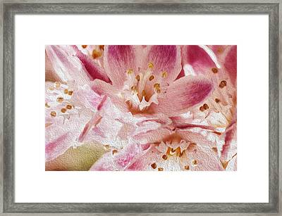 Pink Framed Print by Celso Bressan