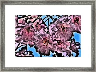 Pink Cherry - Black On Blue Framed Print by Jen White