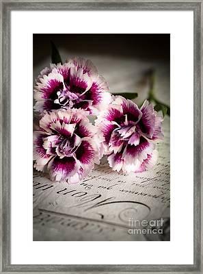 Pink Cloves Framed Print by Jan Bickerton