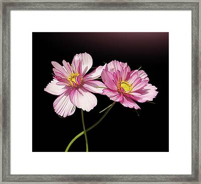 Pink Cosmos Flower Framed Print by Gitpix