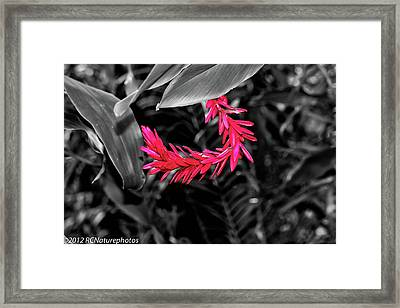 Framed Print featuring the photograph Pink Curve by Rachel Cohen