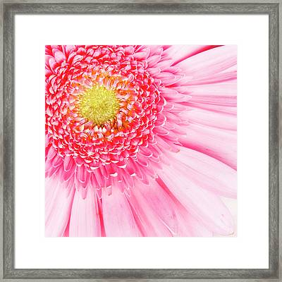 Pink Delight II Framed Print by Tamyra Ayles