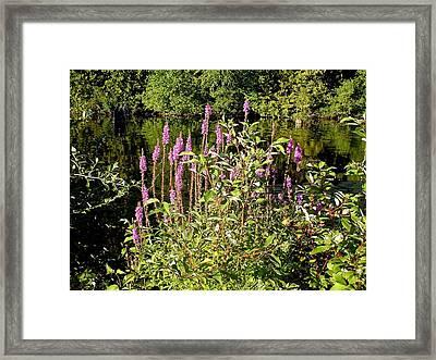 Pink Framed Print by Dennis Leatherman
