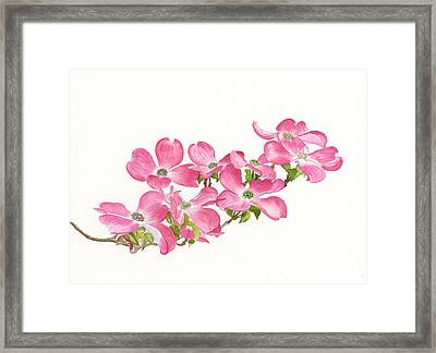 Pink Dogwood Framed Print by Sharon Freeman