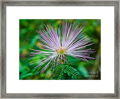 Framed Print featuring the photograph Pink Expression by Eve Spring