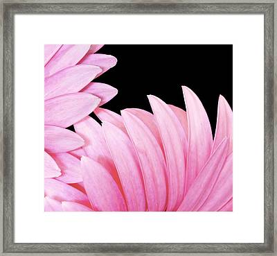 Pink Fan Framed Print