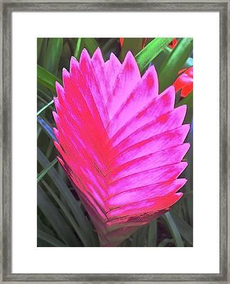 Pink Fan Framed Print by Paul Washington