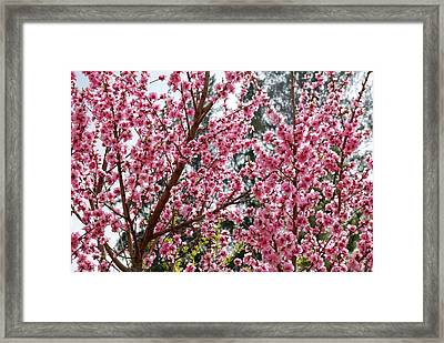 Framed Print featuring the photograph Pink Flood by Fotosas Photography
