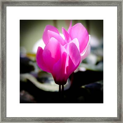 Pink Floral Framed Print by David Patterson