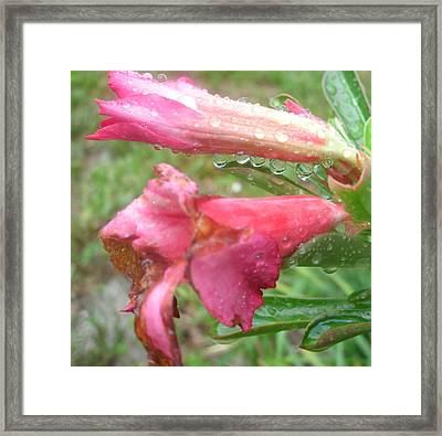 Pink Flower And Raindrops 3 Framed Print