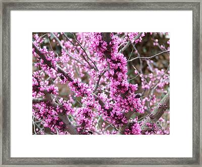 Framed Print featuring the photograph Pink Flower by Andrea Anderegg