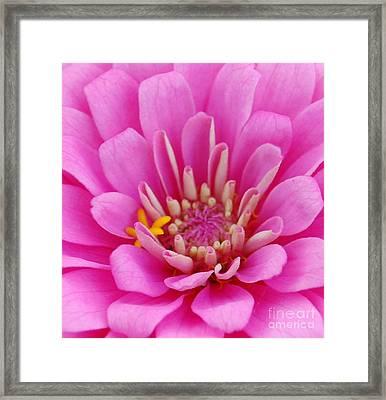 Pink Flower Center Framed Print by Patty Vicknair
