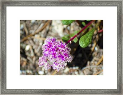 Pink Flower Close Up Framed Print by M Valeriano