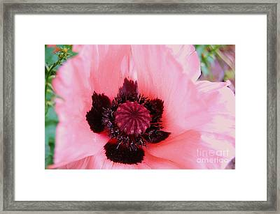 Framed Print featuring the photograph Pink Flower by Jasna Gopic