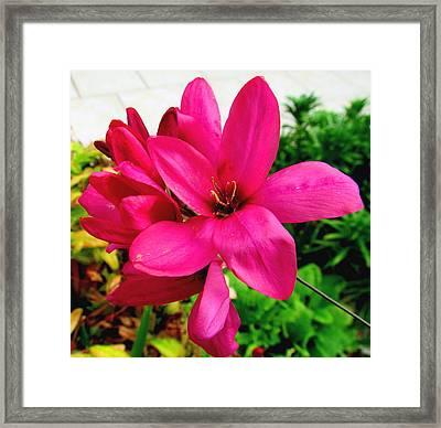 Pink Flower Framed Print by Joyce Woodhouse