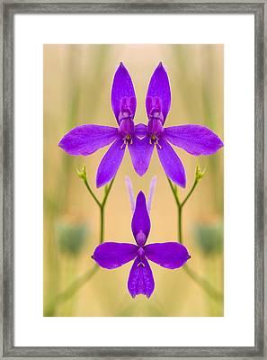 Pink Flower Reflection Framed Print