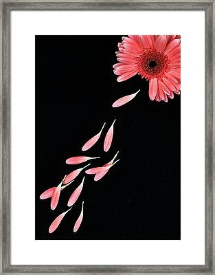 Pink Flower With Petals Framed Print by Photo by Bhaskar Dutta