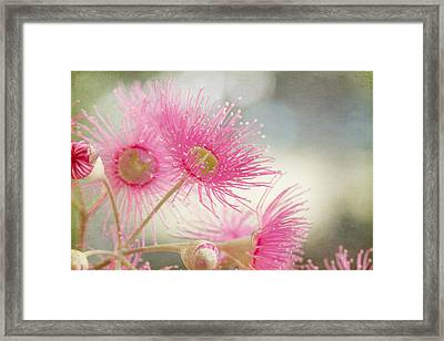 Pink Flowering Framed Print