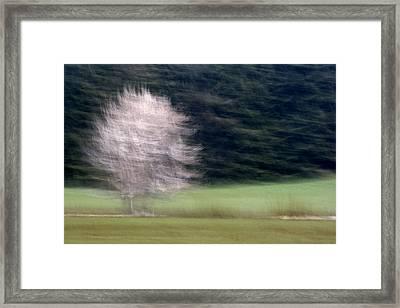 Pink Flowering Tree In Spring Framed Print by Carol Leigh