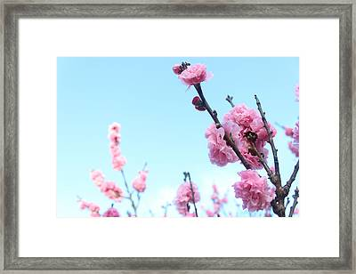 Pink Flowers Framed Print by Allen Jiang