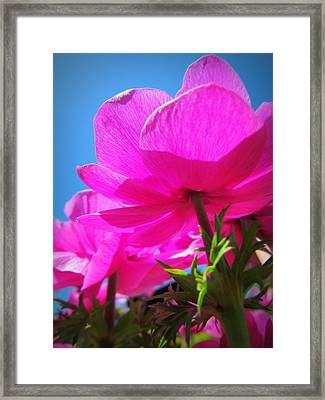 Pink Flowers In The Sky Framed Print