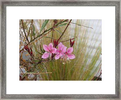 Framed Print featuring the photograph Pink Fountain - Guara by Bonnie Muir