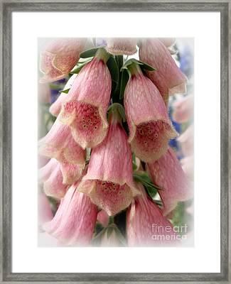 Pink Foxglove Framed Print by Lainie Wrightson