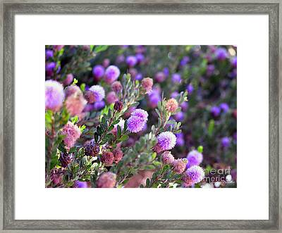 Pink Fuzzy Balls Framed Print by Clayton Bruster