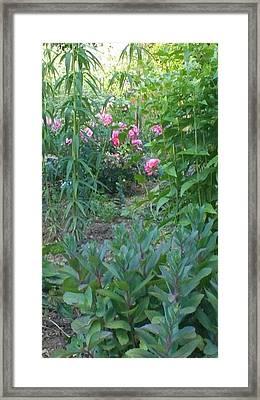 Pink Garden Flowers Framed Print by Thelma Harcum