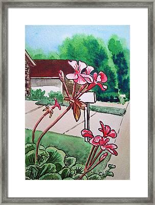 Pink Geranium Sketchbook Project Down My Street Framed Print by Irina Sztukowski