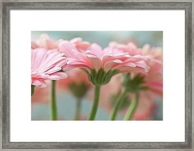 Pink Gerbera Daisies Framed Print by Mary Smyth