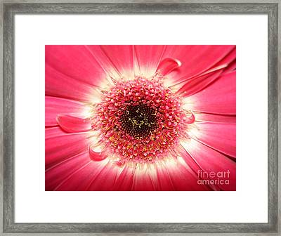 Framed Print featuring the photograph Pink Gerbera Daisy Close-up by Kerri Mortenson