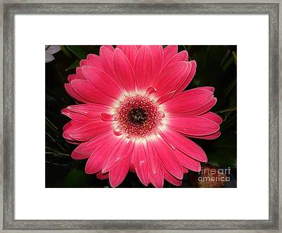 Framed Print featuring the photograph Pink Gerbera Daisy by Kerri Mortenson