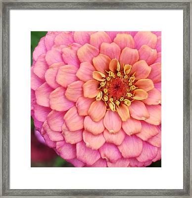 Pink Happening Framed Print by Bruce Bley