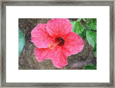Framed Print featuring the photograph Pink Hibiscus by Donna  Smith