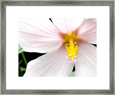 Framed Print featuring the photograph Pink Hybiscus by Jodi Terracina
